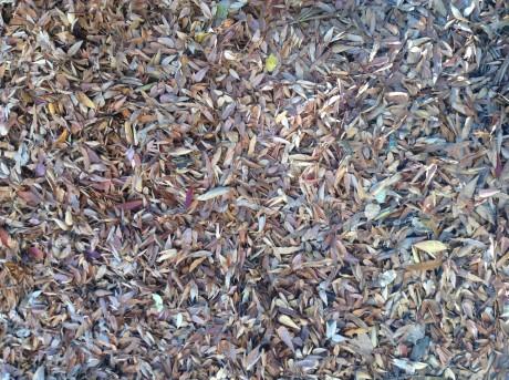 500_leaves