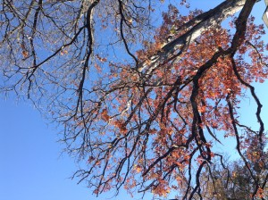 500_tree