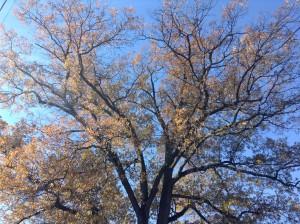 500_tree2